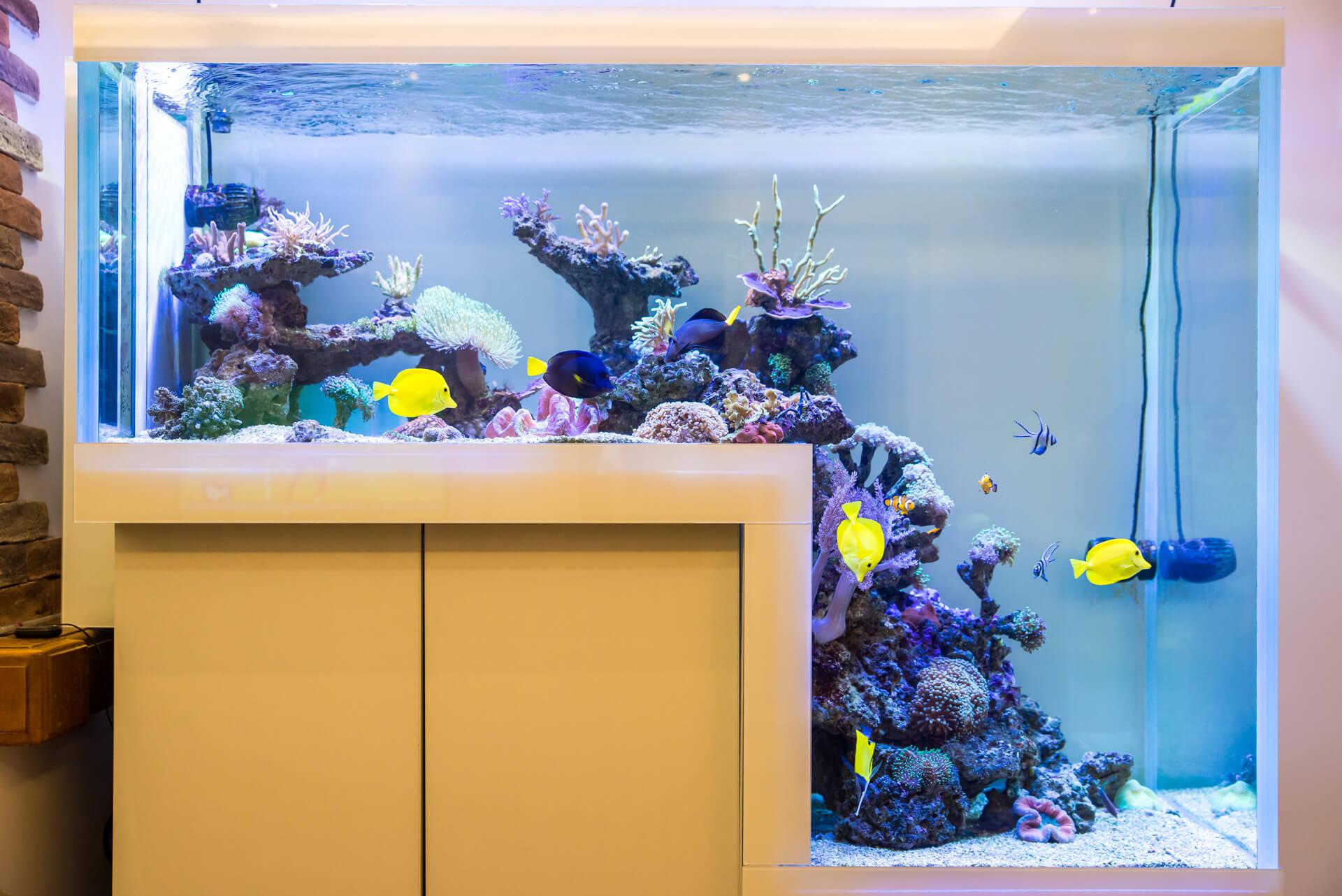 reefroom–175